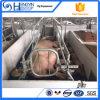 Клеть европейской свиньи типа порося