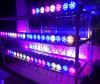 beides 12W seitliche Wand-Licht (ROT)