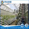 Парник пленки низкой стоимости Китая с Hydroponic системой