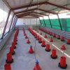 Prefabricated Streel 구조 가금 헛간 디자인 농장 보일러 닭장