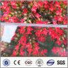 Freier Polycarbonatfester Sun-Blattfoshan-PC Plastikdach-Blatt