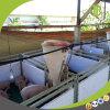 Großhandelsabsetzenpflanzenschule-Stall für Ferkel-Notwendigkeits-Agens