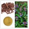 Estratto vulgaris del Prunella, estratto comune del punto di Selfheal