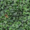 Schermo artificiale di segretezza della rete fissa della pianta verde