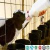 Pflanzenfett-Puder vorgemischt für Baby-Tier oder Haustier Milch-Stellvertreter
