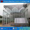 Estufa econômica da ventilação do telhado para a planta grande do vegetal da área