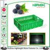 Cassa di plastica di raccolta di plastica della frutta degli scomparti della frutta della cassa