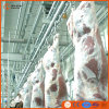 Cer Kosher Cattle Slaughter Machine in Abattoir