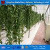 مقتصدة سقف تهوية دفيئة [هيدروبونيك] لأنّ معمل نباتيّة