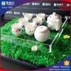 Bandeja de acrílico del plexiglás del té de Gongfu de la bandeja de la porción de la venta directa