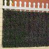 La barriera artificiale smontabile pianta la rete fissa del giardino