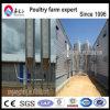 Equipo de la granja avícola del pollo de la alta calidad para la venta