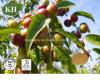 100% naturel extrait de camu camu / Vitamine C 20 %