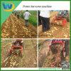 Жатка чеснока сладкого картофеля пользы земледелия овоща корня Китая