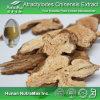 Выдержка 100% естественная Atractylodes (коэффициент: 4:1 ~20: 1)