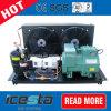 Eenheid van de Compressor van de Koeling van het Voedsel van de Diepvriezer van Icesta de Commerciële Bevriezende Condenserende