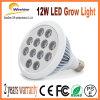 12W la striscia di vendita calda LED si sviluppa chiara per la pianta della tenda