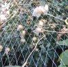 100%の新しいバージンの緑のHDPEはネット鳥の突き出た