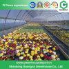 Serre chaude en plastique de Simple-Envergure commerciale pour des fleurs