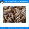 Venda por atacado de farfalhês secos para alimentos para animais de estimação