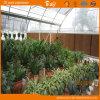 Multi-Span Film Greenhouse con Arch Structure per Agricultural Use