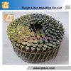 중국 Factory에 있는 나사 Shank Coil Nails Coil Wire Nails