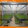 개골창에 의하여 연결되는 구조를 가진 온실을 설치하는 농업