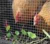 家禽の網のためのハードウェアの布そして溶接された金網