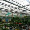 35 anni di serra di vetro redditizia di garanzia per i fiori