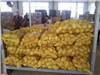Frische Holland-Kartoffel