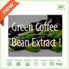 ハーブのエキスはのための重量のHalalの緑のコーヒー豆のエキスの粉を失う