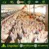 Цыпленок Farm-ISO9001 стальной структуры: 2008
