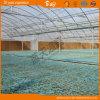 Chambre verte de film plastique de tunnel de qualité pour planter des légumes