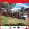 Reboque de esqueleto do registro dos eixos dobro de madeira do transporte