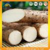 Extrait d'igname sauvage avec 98% de Diosgenin / Dioscine / Protodioscine