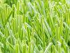 Football Field (A650119ZD13001)のための高品質Artificial Grass