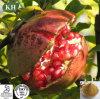 Natürlicher Granatapfel-Schalen-Auszug - Ellagic Säure