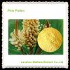 Alta calidad 100% puro polen de pino en Cell Wall granel en polvo roto