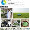 Polvere sottile dell'erba del frumento del tè di erba di bellezza cinese naturale del tè/polvere della spremuta erba di orzo
