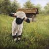 Pittura a olio Handmade dell'agnello sveglio