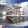 La volaille de cage de poule de batterie met en cage le matériel de ferme (BDT031-JF-31)