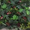 50x50см против искусственного УФ вертикальный сад для монтажа на стену озеленение