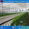 野菜花のプランテーションのための安い工場価格のフィルムの小屋の温室