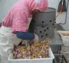 دجاجة قانصة [بيلينغ مشن] لأنّ دجاجة [سلوغترينغ]
