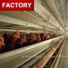 L'Ouganda ferme avicole de la cage de la couche de poulet automatique