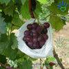 Pp.-nichtgewebtes Gewebe für Frucht-Beutel-Bedeckung