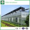 Landbouw/de Commerciële Tent van het PC- Blad met KoelSysteem