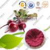 Polvo rojo del pigmento de la raíz natural de la remolocha