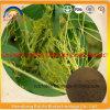 Las hierbas chinas Dodder el extracto/el Cuscuta Europaea del germen Extract/Tu Si Zi