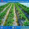 Polyplastikbedeckung-Gewächshaus des heißen Verkaufs-2017 für Blumen